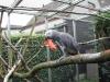 *** el, kabul için afrika gri papağanlarından konuşuyor ***