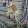 İstanbulda sahibinden satılık sultan papağanı