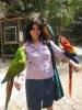 Kabul için ücretsiz macaw papağanları
