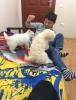 Sağlikli beyaz terrier