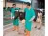Süper genetik yapılara sahip damızlık süt inekleri sahibinde