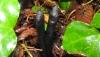 9 yasindaki erkek filistinli cocuk parmakları