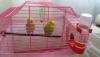Acil satılık çift muhabbet kuşu yumurtlamaya hazir