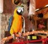 Ara macaw papağanıma yeni ev arıyorum