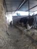 Çanakkale ezine ilçesi mahmudiye mevkiinde satılık çiftlik a