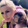 Capuchin maymunları