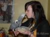 Evlat edinmek için güzel afrikalı gri papağan