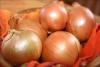 Garantili sertifikalı soğan tohumu