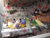 Gouldian finch gökkuşağı ispinozu 05327121516