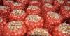 Her türlü soğan alım satımı