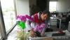 İç mekanbüro çiçekleri bakım hizmetleri