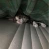 Kedi oteli karşıyaka izmir