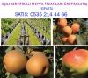 Meyva fidanları satışı