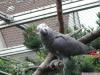 Papağan kafes, swinga ve armut ağacından