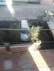 Sahibinden satılık palo wikent
