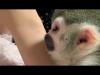 Sevgi dolu bir ev için ücretsiz örümcek maymun