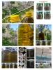 Sızma zeytinyağı ve çeşitleri