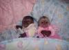 Ücretsiz evlat edinmek için baby marmosets monkeys