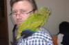 Yavru evcil amazon papağanı