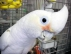 Amazing talking parrots available and affordable
