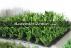 Anaokulu bahçe çimi dış mekan çim fiyatları