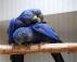 Güzel bebek 5 aylık sümbül macaw.