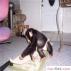 Kabulü için sevimli bebek şempanze maymun