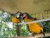 Sevimli ve sevimli macau papağanlarından hoşlanıyorlar.